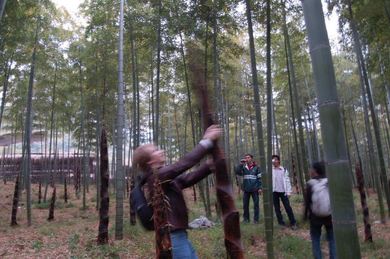 Waving bamboo