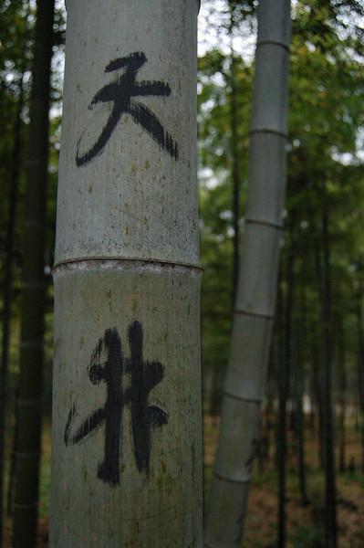 Characteristic bamboo