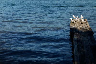 Dock Poopers