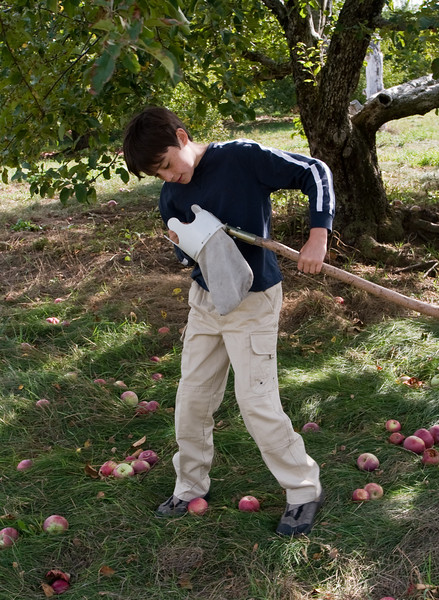 Benjamin picking an apple out of the pole bag.