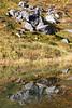 Hatcher Pass granite reflects in a slow spot in Archangel Creek.