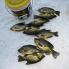 CRAPPIES THAT WE CAUGHT (CLYDE CAUGHT MOST OF THEM) 2/16/07 KLEUTSCH LAKE