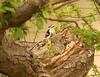 Woodpecker <br /> <br /> Grand Pre, Nova Scotia.<br /> May 2007.
