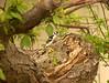 Woodpecker 3.<br /> <br /> Grand Pre, Nova Scotia.<br /> May 2007.