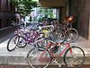 Bikes at Harvard.