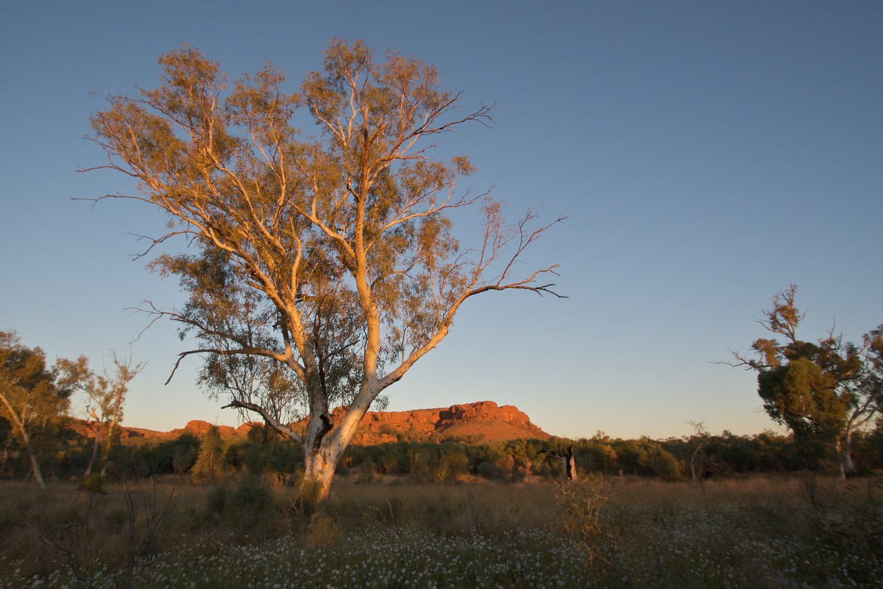 Sunset over King's Canyon • The sun sets over King's Canyon, in Watarrka National Park (Northern Territory).