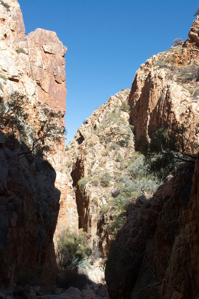 Standley Chasm • Looking up Standley Chasm in the Northern Territory in the midday sun.