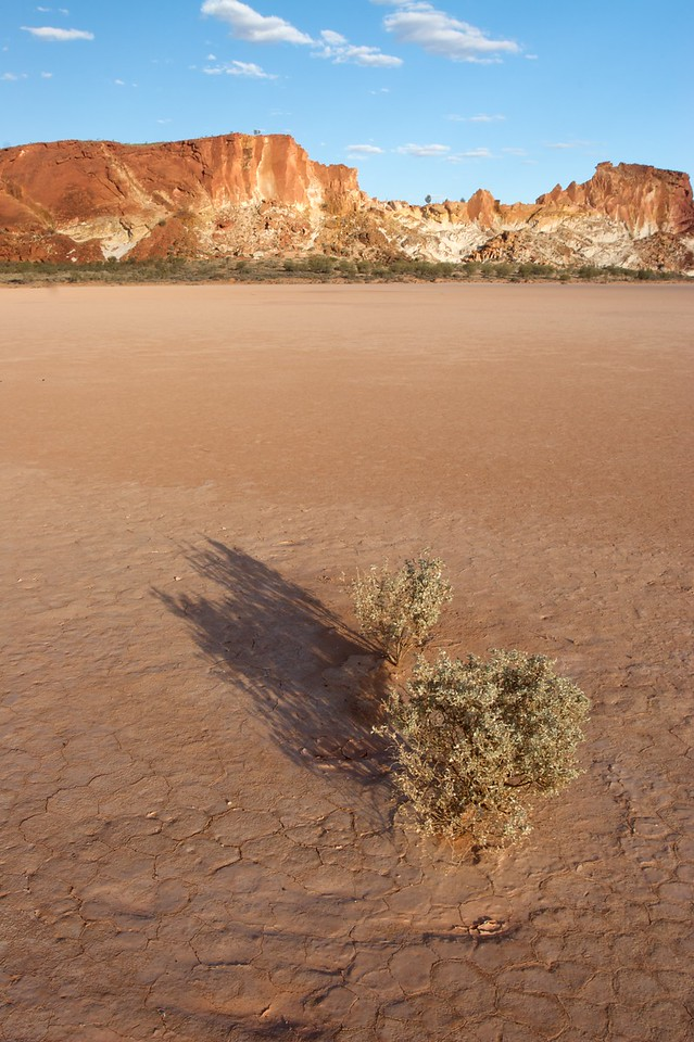 A lonely shrub • A shrub pokes out of the clay pan at Rainbow Valley, about 70km south-east of Alice Springs.