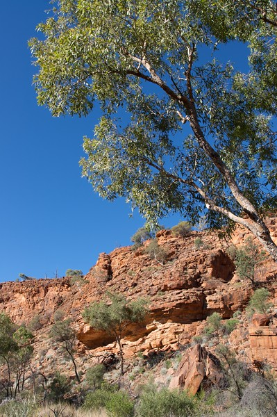 Kathleen Springs • The rocks along the path to Kathleen Springs, in the Watarrka National Park (Northern Territory).