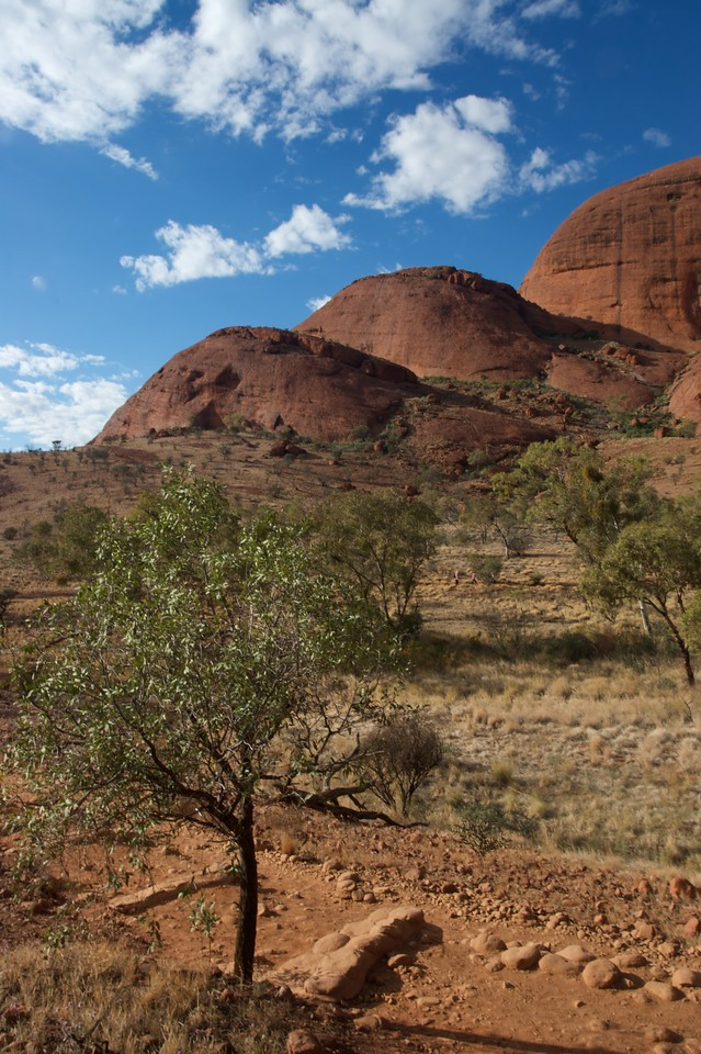 Among the Olgas • A view of some of the Olgas' domes on the 'Valley of the Winds' walk.