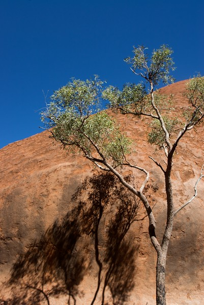 Shadow on the Rock • A gum tree casts its shadow on Ayers'Rock