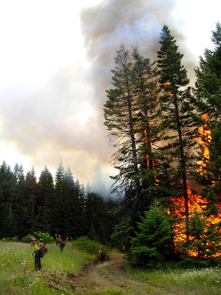 One of our better assignments was a two-day backburn of the last unsecured flank of the fire.  Here the crew holds the green while trees torch off just behind them.