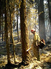 A beam of sunlight filters through as Michael Mulcahy downs a burning tree.