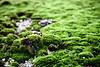 roof moss canterbury