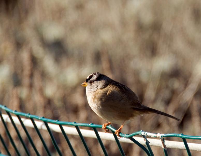 12-30-07 Bird on a Wire