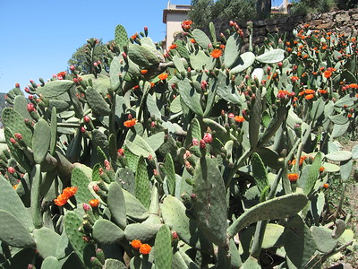 Cacti at Park Güell