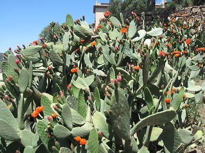 Cacti at Park Güell