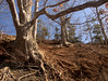 Their root systems are interesting as they fight against the affects of rapid erosion.  <br /> 10:26 R