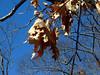 Remnants of Autumn.