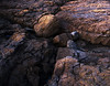 Boulder in Crevice<br /> <br /> Basalt Formations at Culloden Wharf<br /> Culloden NS