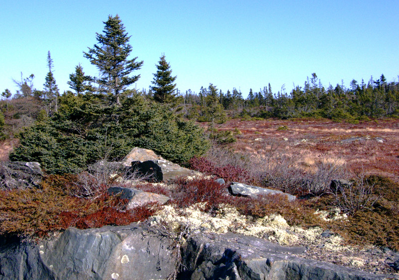 The landscape in this area include granite, red brustle bogs, and low growth trees.