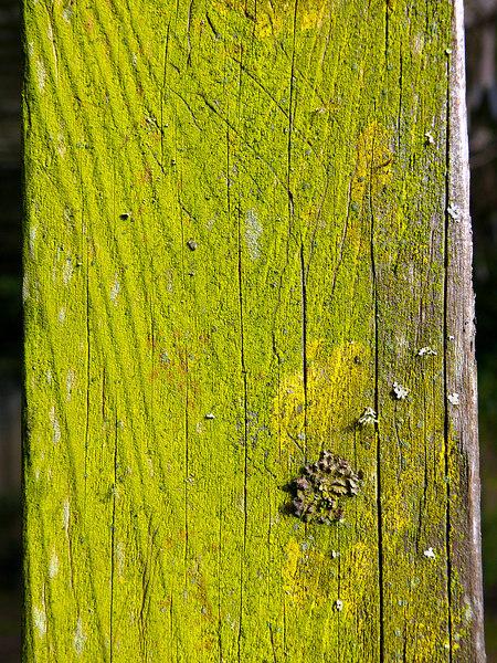 Tue 02-06-07 Green Lichen