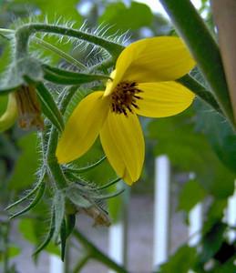 Patio Garden Flowers