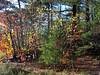 Autumn colours.  Melville Cove, Halifax, Nova Scotia, Canada.<br /> <br /> October 2006