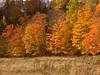Fall folliage near Nuttby, N.S. (Truro area).  <br /> <br /> October 2007.