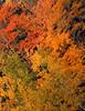 Fall folliage near Nuttby, N.S. (Truro area).<br /> <br /> October 2007.