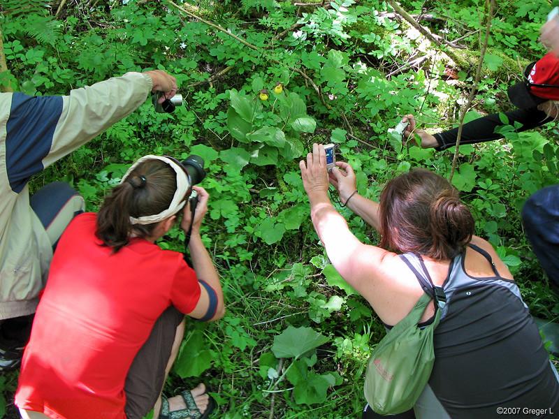 Guckuskofotografer som fågeln ser det.
