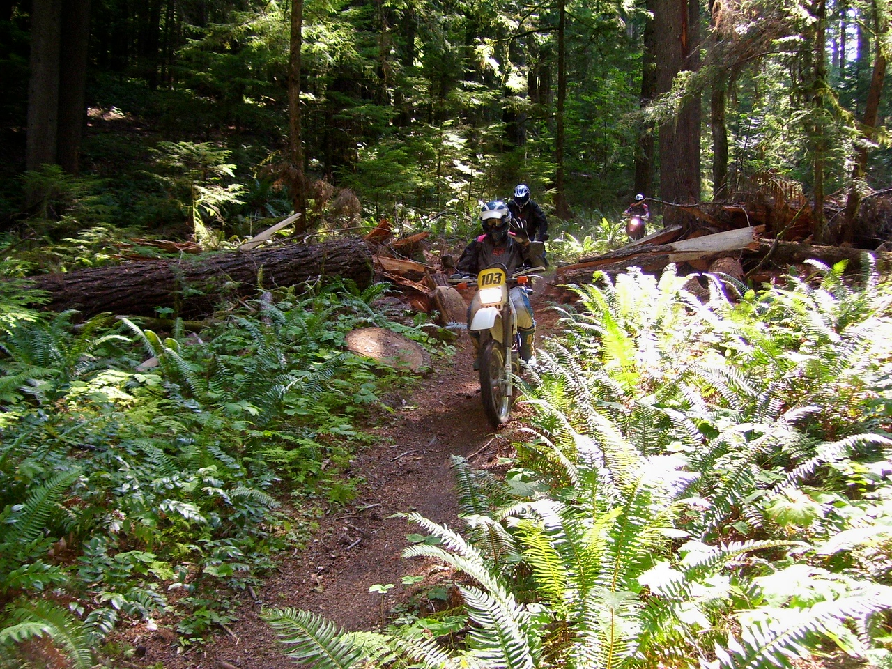 Nicest trail in the GPNF, Krause Ridge #275