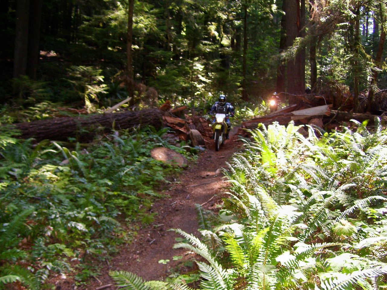 Paul and one of the many big logs cut out of the trail this year.