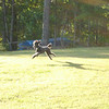 """Sullivan springs into action - """"I'll get that squirrel this time!"""""""