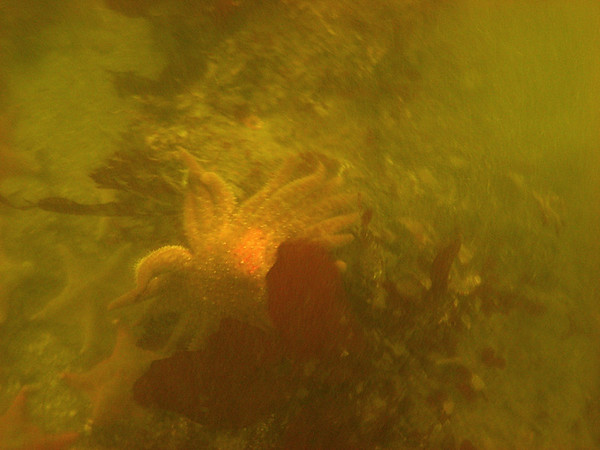 More of the sea-star-monster-thing