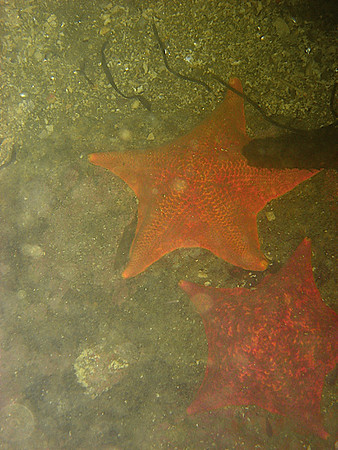 Once we got in, we saw Starfish like these