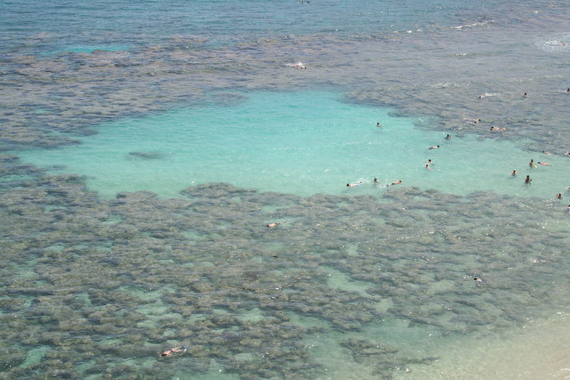 Reef at Hanauma Bay