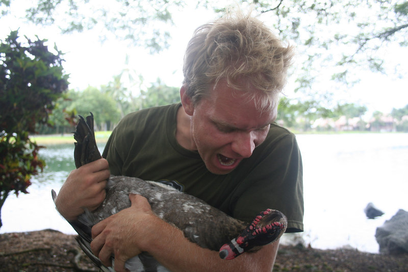 Me trying to eat a very large muscovy duck