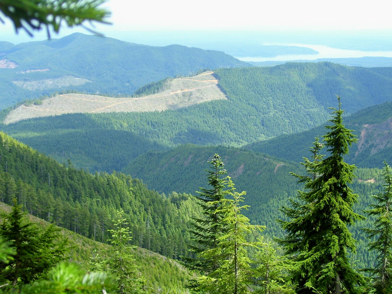 Looking back at the ridge we had been at a few hours earlier. Hood Canal at the top right of the picture.