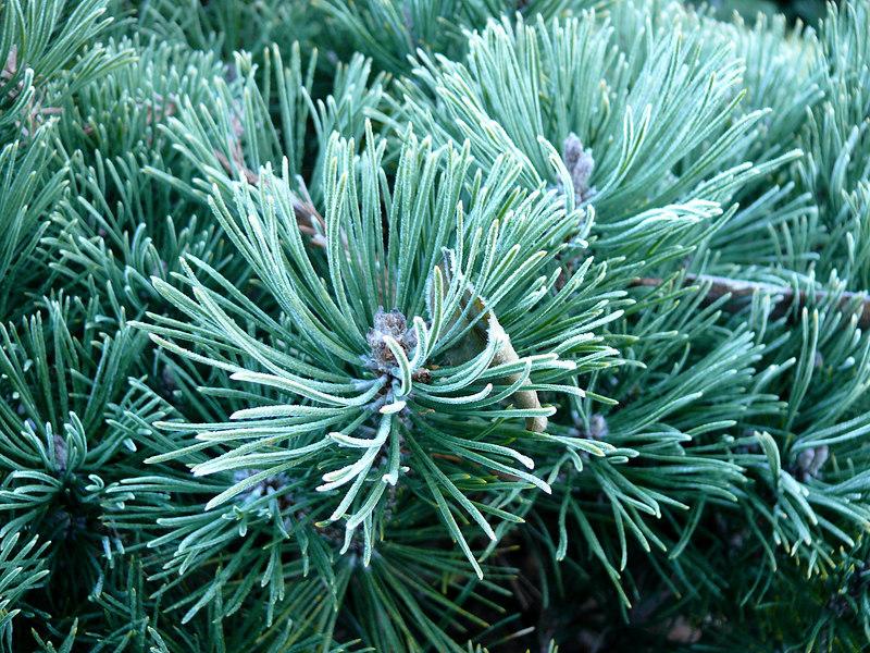 Mon 01-15-07 Frosty Morning