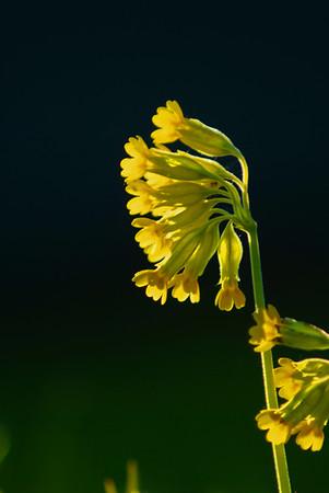 Ett osedvanligt vackert blomster...