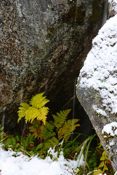 Summer ferns try to survive as winter takes over in Lane Valley.