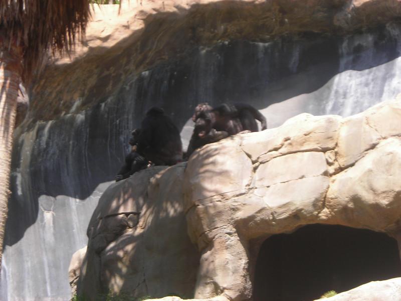 LA Zoo