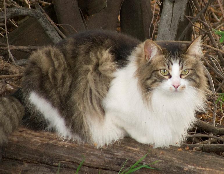 03-25-07 Cat in the Woods