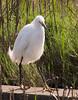 03-30-07 Egret
