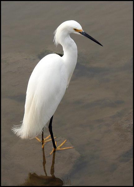 03-25-07 Egret