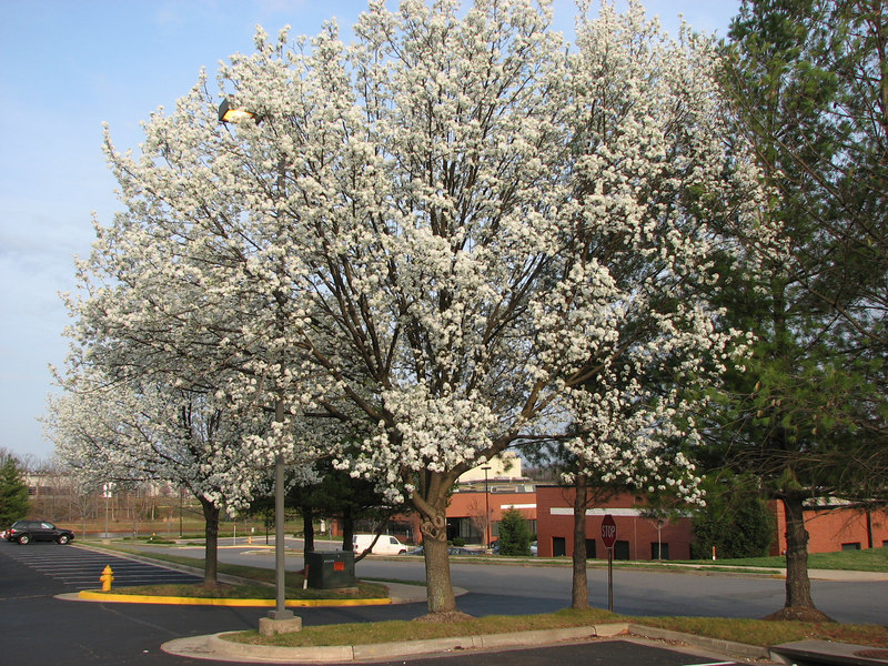 The trees are blooming in Virginia!