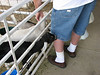 The goats wanted to eat his shorts.....