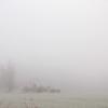 Trespassing Fog