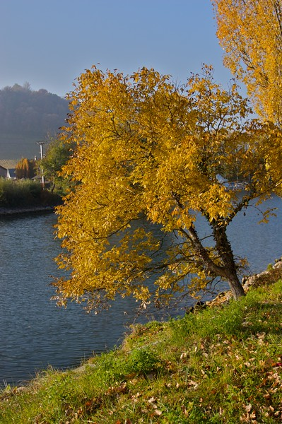 Autumnal • A tree clings to the bank of the canal in Sugiez, in the Canton of Fribourg.